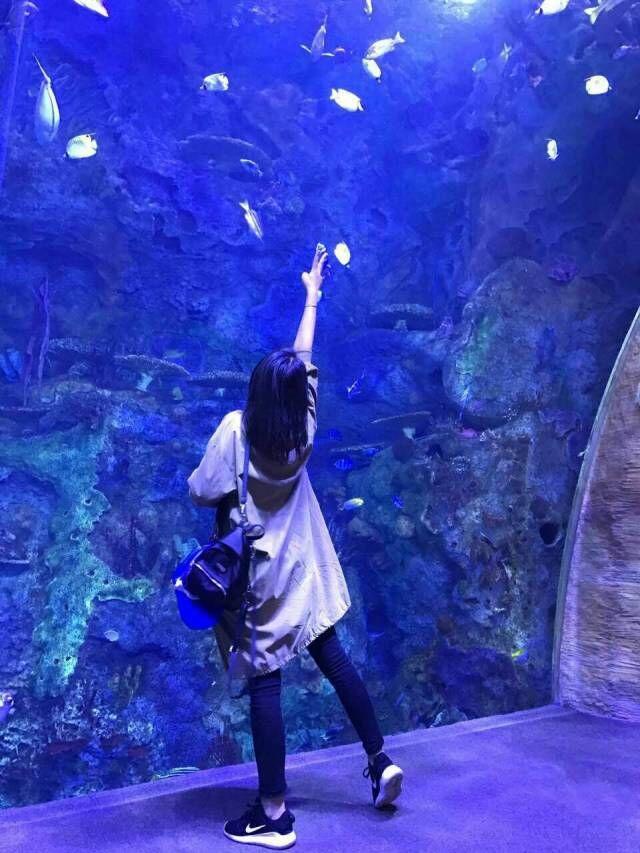 壁纸 海底 海底世界 海洋馆 水族馆 640_853 竖版 竖屏 手机